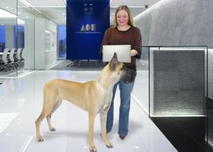 dog-desk