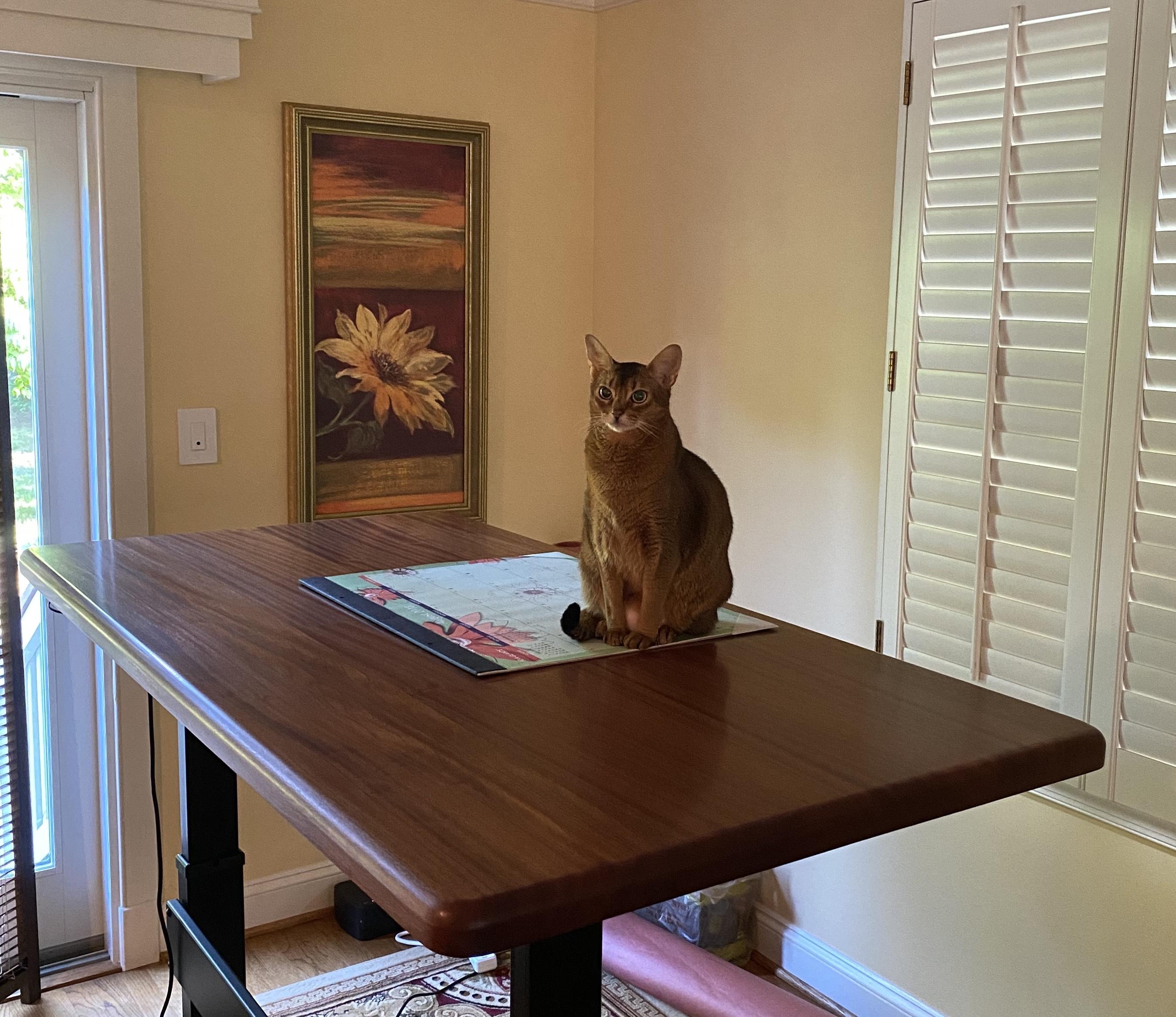 "Custom DIY Top with 27.5"" x 45.125"" Black VertDesk Standing Desk Frame"